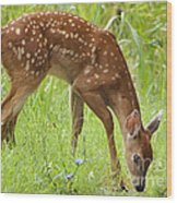 Little Fawn Blue Wildflowers Wood Print