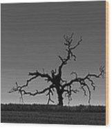 Death Of A Tree Wood Print