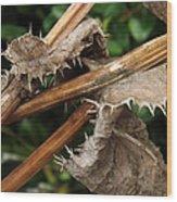 Death Of Thorns Wood Print
