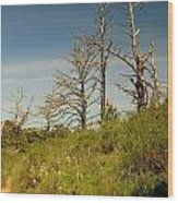 Death On Angel Island Wood Print