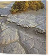 Death Valley Mudflat Wood Print