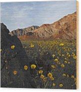 Death Valley Spring 1 Wood Print