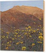 Death Valley Spring 2 Wood Print
