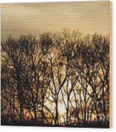 December Forest Dusk Wood Print