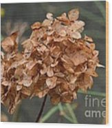 December Hydrangea II Wood Print