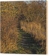 december light - Leif Sohlman Wood Print