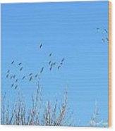 December Sandhill Cranes  Wood Print