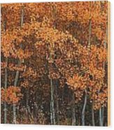 Deciduous Aspen Forest In Fall Wood Print
