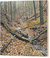 Deciduous Forest With Ravines Wood Print