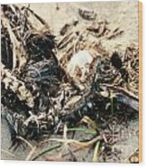 Decomposing Dead Bird Wood Print