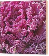 Decorative Fancy Pink Kale Wood Print