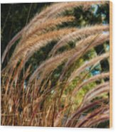 Decorative Grass Wind Autumn And Orton Wood Print