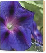 Deep Blue Morning Glories Wood Print