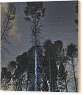 Deep Forest At Night Wood Print