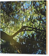 Deep Forest Light Wood Print