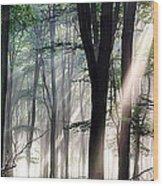 Deep Forest Morning Light Wood Print