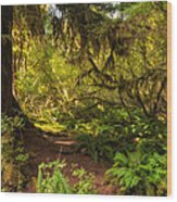 Deep Into The Hoh Rain Forest Wood Print