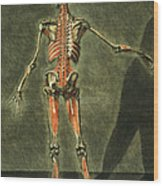 Deep Muscular System Of The Back Wood Print