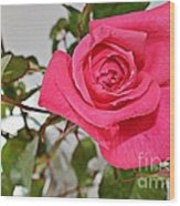 Deep Pink Rose - Summer - Rosebuds Wood Print