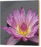 Deep Pink With Yellow... Wood Print