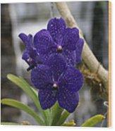 Deep Purple Orchard Wood Print