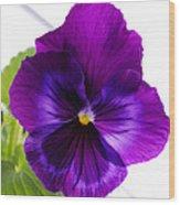 Deep Purple Pansy Wood Print
