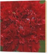 Deep Red Carnation 2 Wood Print