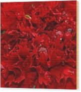 Deep Red Carnation Wood Print