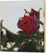 Deep Red Roses Wood Print