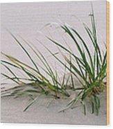 Deep Roots On Sand Wood Print