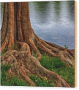 Deep Roots - Tree On North Carolina Lake Wood Print by Dan Carmichael