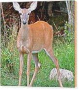 Deer 102 Wood Print