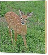 Deer 11 Wood Print