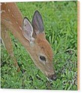 Deer 12 Wood Print