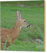 Deer 13 Wood Print
