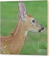 Deer 14 Wood Print