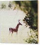 Deer 2 - Buck - White-tailed Wood Print