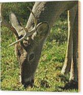 Deer 2009 Wood Print