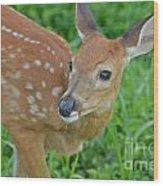 Deer 21 Wood Print