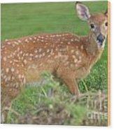 Deer 24 Wood Print