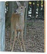 Deer 3 Wood Print