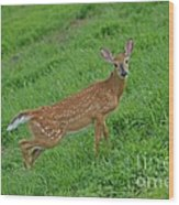 Deer 6 Wood Print