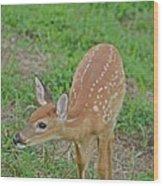 Deer 7 Wood Print
