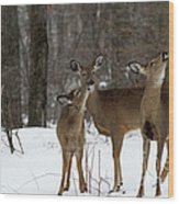 Deer Affection Wood Print