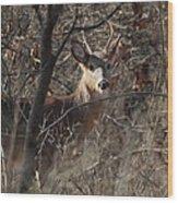Deer Ahead Wood Print