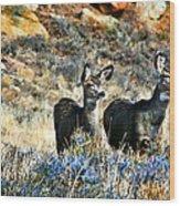 Deer Alert Wood Print by Rebecca Adams