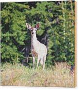 Deer Approaching Wood Print