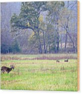 Deer At Cades Cove Wood Print