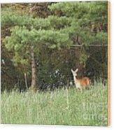 Deer At Dusk V1 Wood Print