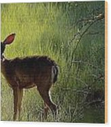 Deer At Home Away From Home Wood Print